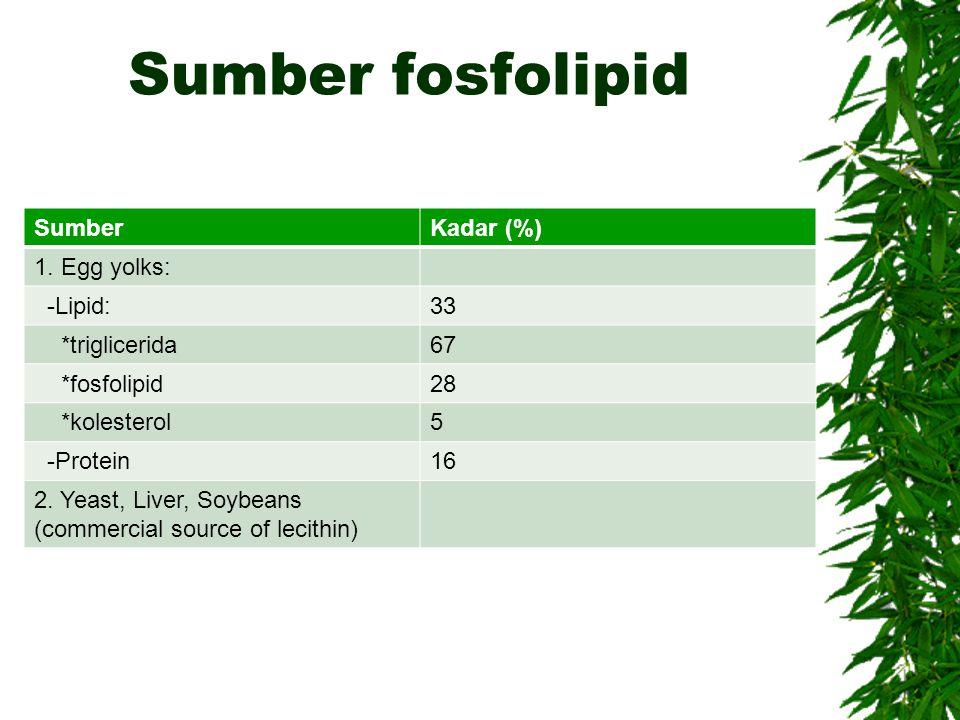 Sumber fosfolipid SumberKadar (%) 1. Egg yolks: -Lipid:33 *triglicerida67 *fosfolipid28 *kolesterol5 -Protein16 2. Yeast, Liver, Soybeans (commercial