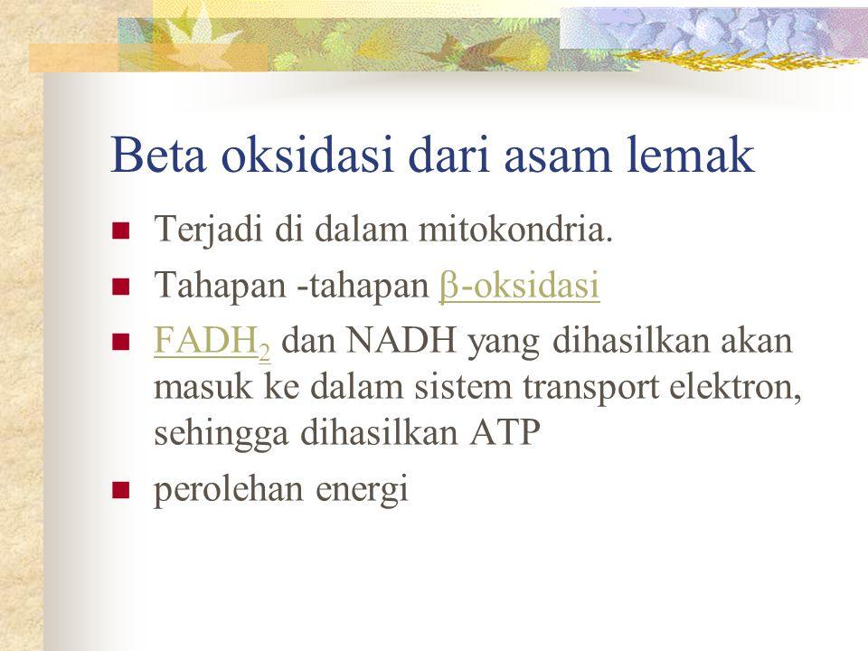 Beta oksidasi dari asam lemak Terjadi di dalam mitokondria. Tahapan -tahapan  -oksidasi  -oksidasi FADH 2 dan NADH yang dihasilkan akan masuk ke dal