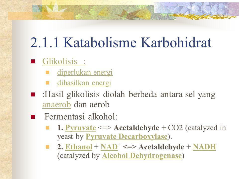 Fermentasi alkohol