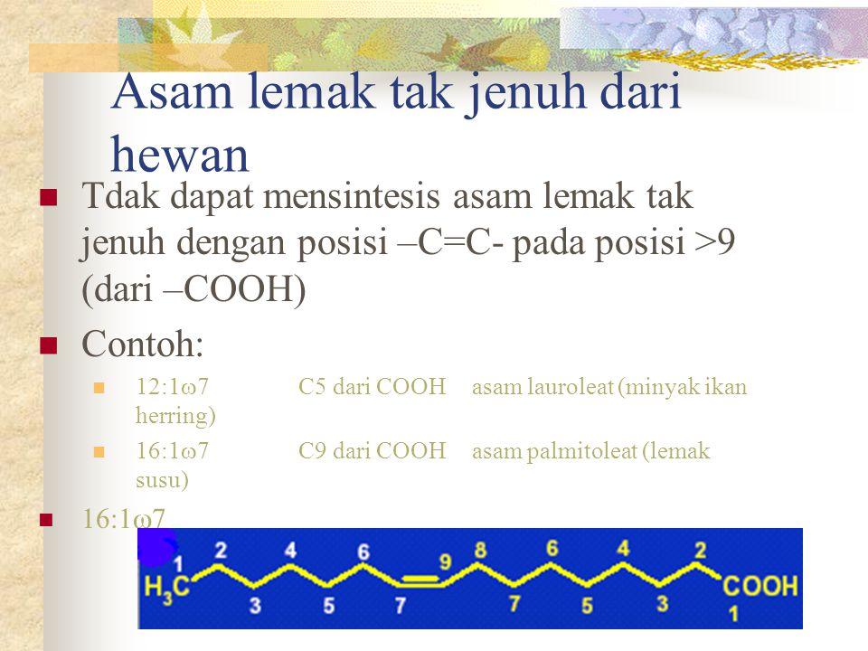 Asam lemak tak jenuh dari hewan Tdak dapat mensintesis asam lemak tak jenuh dengan posisi –C=C- pada posisi >9 (dari –COOH) Contoh: 12:1  7 C5 dari C