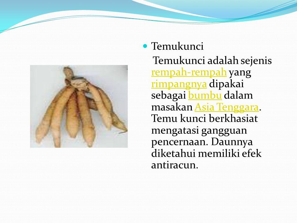 Temukunci Temukunci adalah sejenis rempah-rempah yang rimpangnya dipakai sebagai bumbu dalam masakan Asia Tenggara. Temu kunci berkhasiat mengatasi ga