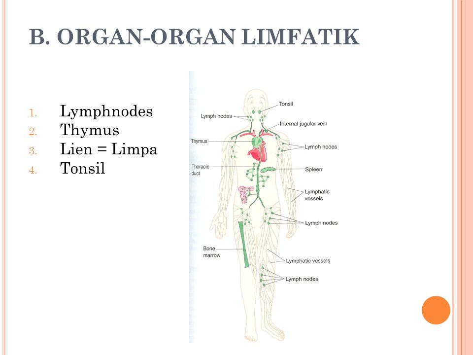 B. ORGAN-ORGAN LIMFATIK 1. Lymphnodes 2. Thymus 3. Lien = Limpa 4. Tonsil