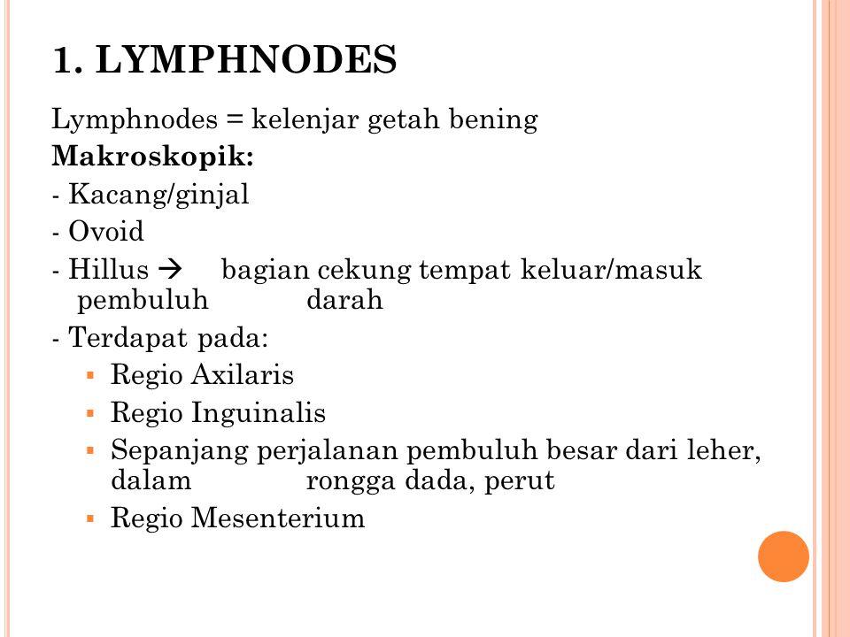 1. LYMPHNODES Lymphnodes = kelenjar getah bening Makroskopik: - Kacang/ginjal - Ovoid - Hillus  bagian cekung tempat keluar/masuk pembuluh darah - Te