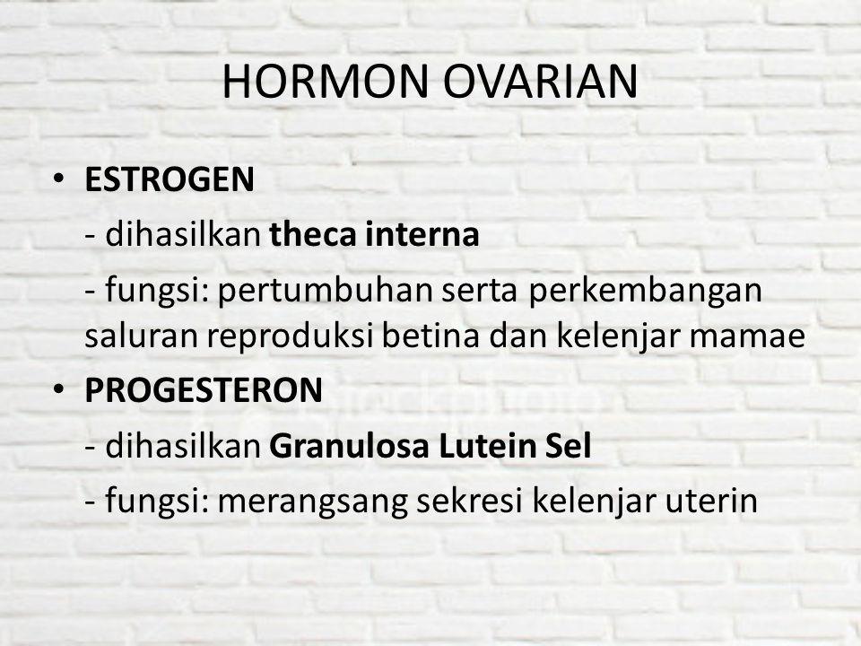 HORMON OVARIAN ESTROGEN - dihasilkan theca interna - fungsi: pertumbuhan serta perkembangan saluran reproduksi betina dan kelenjar mamae PROGESTERON -