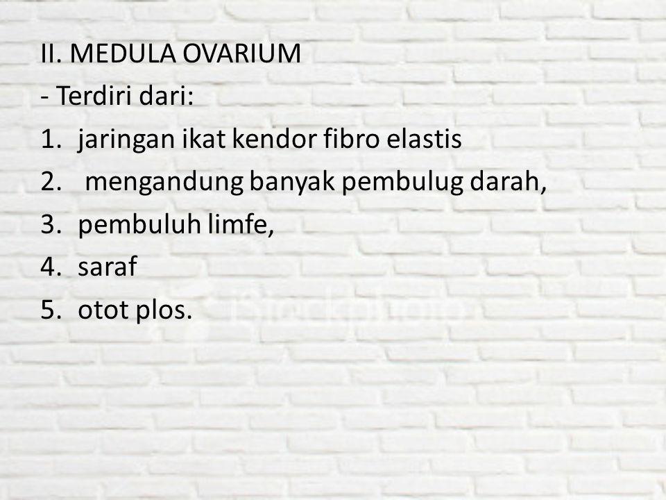 II. MEDULA OVARIUM - Terdiri dari: 1.jaringan ikat kendor fibro elastis 2. mengandung banyak pembulug darah, 3.pembuluh limfe, 4.saraf 5.otot plos.