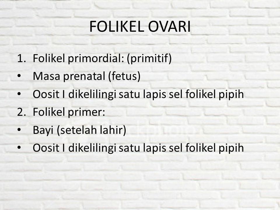 FOLIKEL OVARI 1.Folikel primordial: (primitif) Masa prenatal (fetus) Oosit I dikelilingi satu lapis sel folikel pipih 2.Folikel primer: Bayi (setelah