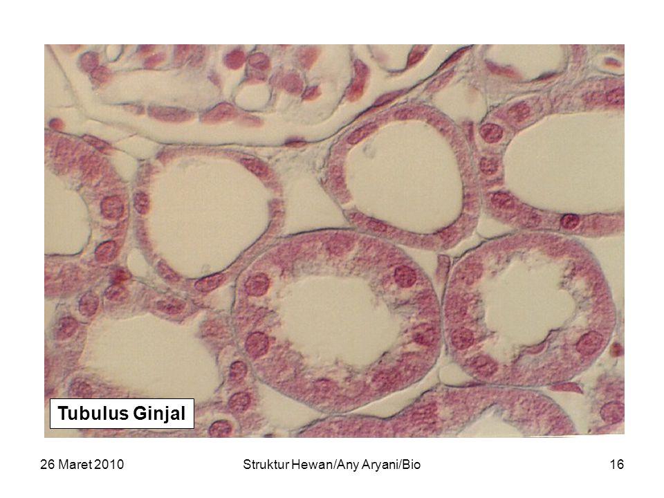 26 Maret 2010Struktur Hewan/Any Aryani/Bio17 Tubulus Ginjal