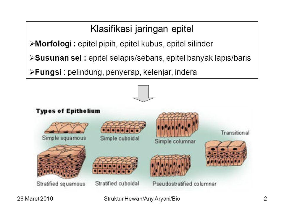 26 Maret 2010Struktur Hewan/Any Aryani/Bio3 Pembuluh Darah