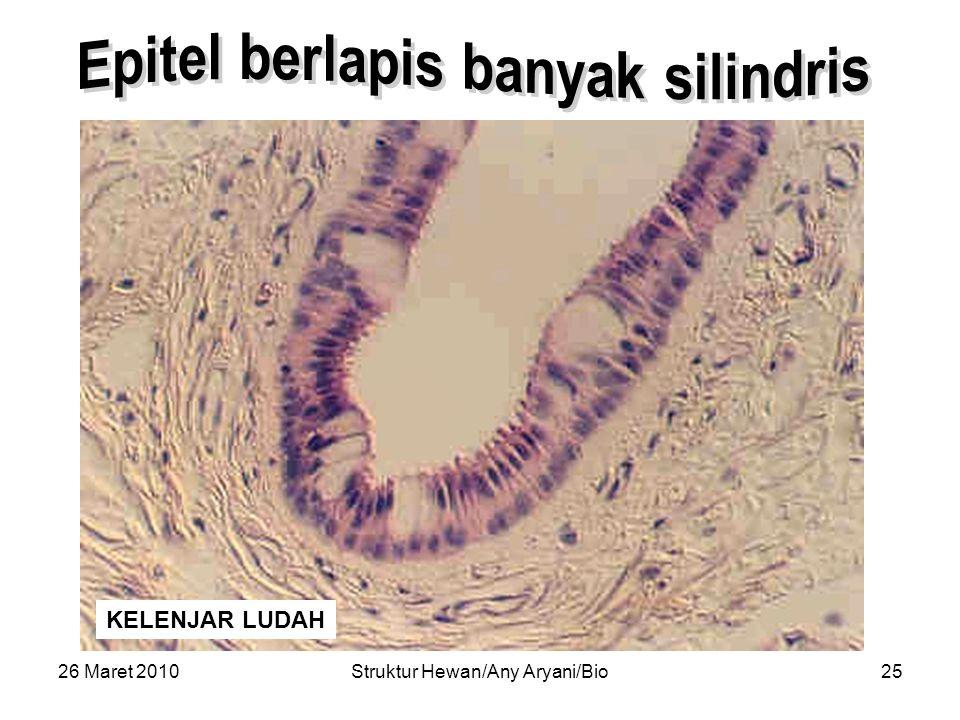 26 Maret 2010Struktur Hewan/Any Aryani/Bio26 KELENJAR LUDAH