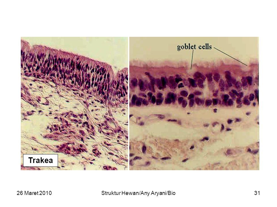 26 Maret 2010Struktur Hewan/Any Aryani/Bio32 Calyx