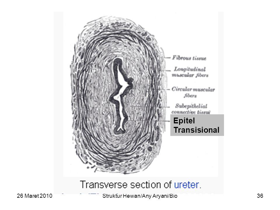26 Maret 2010Struktur Hewan/Any Aryani/Bio36 Epitel Transisional