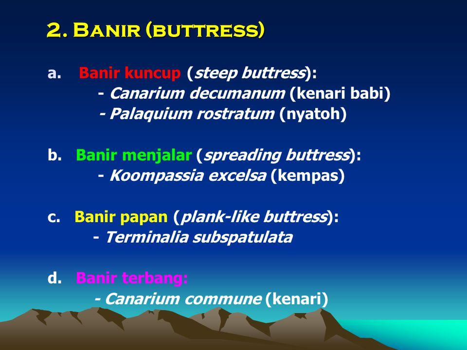 2. Banir (buttress) a.Banir kuncup (steep buttress): - Canarium decumanum (kenari babi) - Palaquium rostratum (nyatoh) b. Banir menjalar (spreading bu