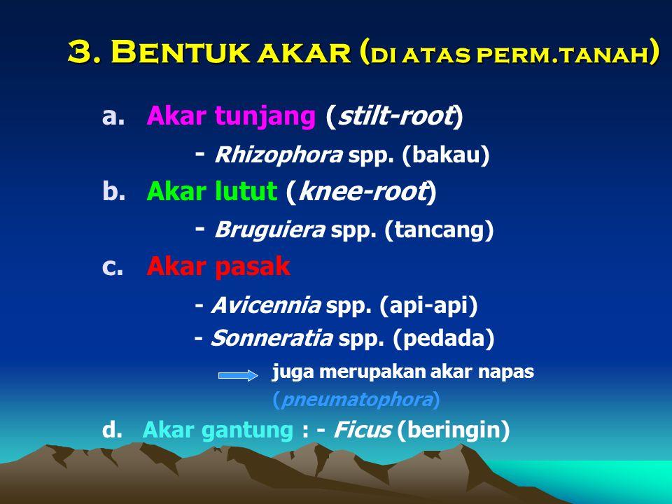 3. Bentuk akar ( di atas perm.tanah ) a.Akar tunjang (stilt-root) - Rhizophora spp. (bakau) b.Akar lutut (knee-root) - Bruguiera spp. (tancang) c.Akar