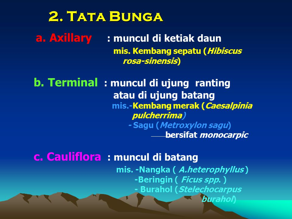 2. Tata Bunga a. Axillary : muncul di ketiak daun mis. Kembang sepatu (Hibiscus rosa-sinensis) b. Terminal : muncul di ujung ranting atau di ujung bat