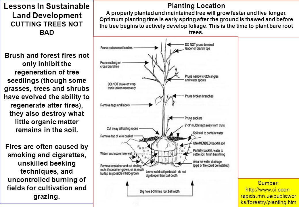 Lessons In Sustainable Land Development CUTTING TREES NOT BAD Brush and forest fires not only inhibit the regeneration of tree seedlings (though some grasses, trees and shrubs have evolved the ability to regenerate after fires), they also destroy what little organic matter remains in the soil.