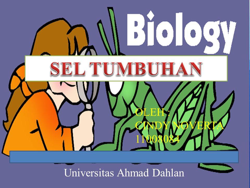 Universitas Ahmad Dahlan OLEH : CINDY NOVERTA 11008084