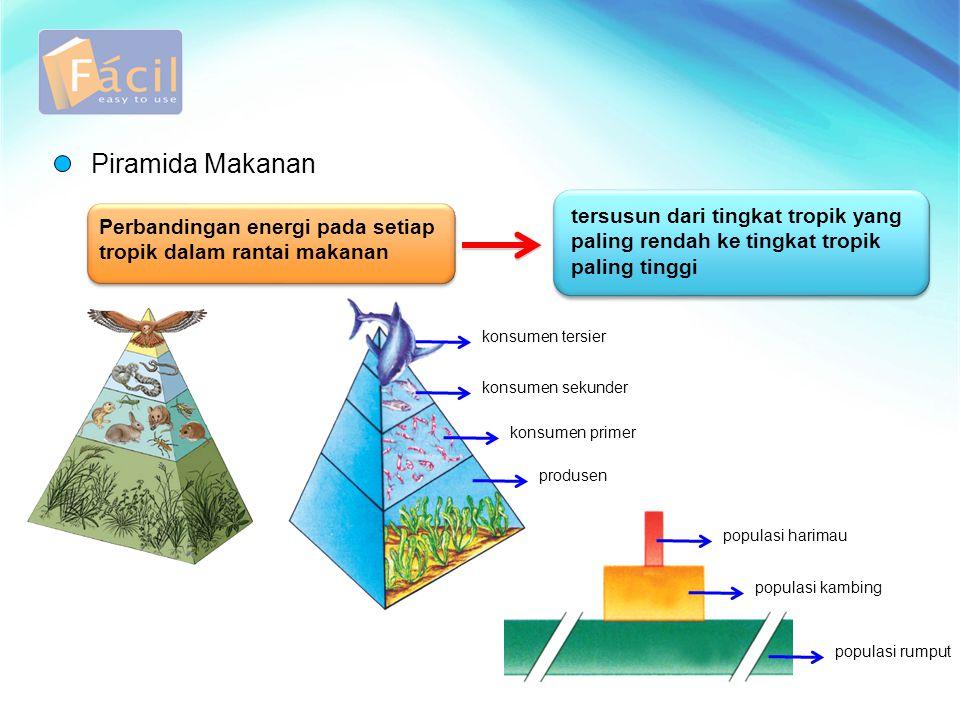Piramida Makanan Perbandingan energi pada setiap tropik dalam rantai makanan tersusun dari tingkat tropik yang paling rendah ke tingkat tropik paling