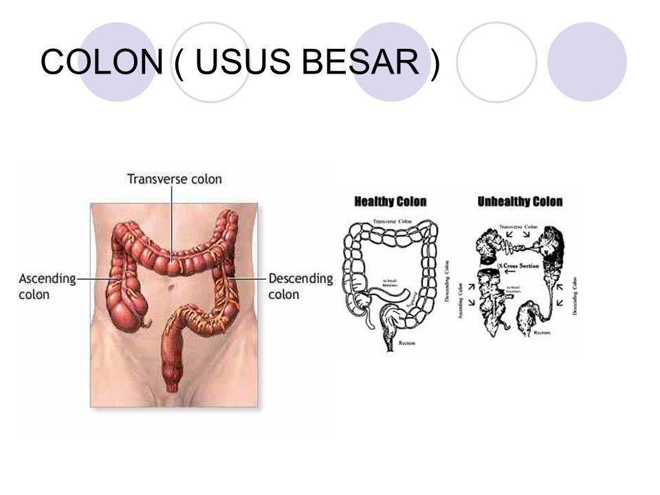 COLON ( USUS BESAR )