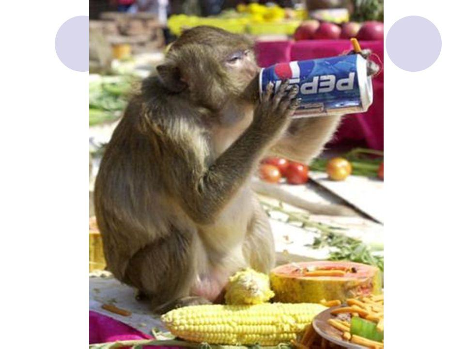Hindarilah perut yg kenyang karena dapat merusak agama, menimbulkan penyakit, dan membuat malas dalam ibadah ( HR Abu Nuaim ) Hancurkan makananmu dg zikir dan sholat serta jangan tidur setelah makan maka hatimu menjadi keras ( HR Ibnu Sunni, Thabrani, Baihaqi ) Barangsiapa ingin diperbanyak kebaikan dalam rumahnya maka berwudhulah sebelum makan dan sesudahnya ( HR Ibnu Majah )