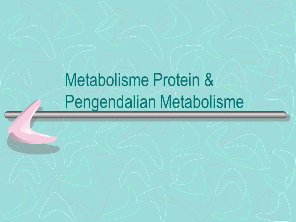 Pendahuluan Hubungan katabolisme & anabolisme protein, Lipid & KarbohidratHubungan katabolisme & anabolisme protein, Lipid & Karbohidrat Siklus Nitrogen:Siklus Nitrogen Fiksasi Nitrogen Sistem enzim: nitrogenase & nitrogenase reduktase –N2 + 8e - + 16ATP + 16H2O -> 2NH3 + H2 + 16ADP + 16 Pi + 8 H + ( Klebsiella pneumoniae) Penggunaan Amonia Fosfatidilserin