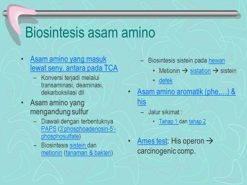Biosintesis asam amino Asam amino yang masuk lewat seny. antara pada TCAAsam amino yang masuk lewat seny. antara pada TCA –Konversi terjadi melalui tr