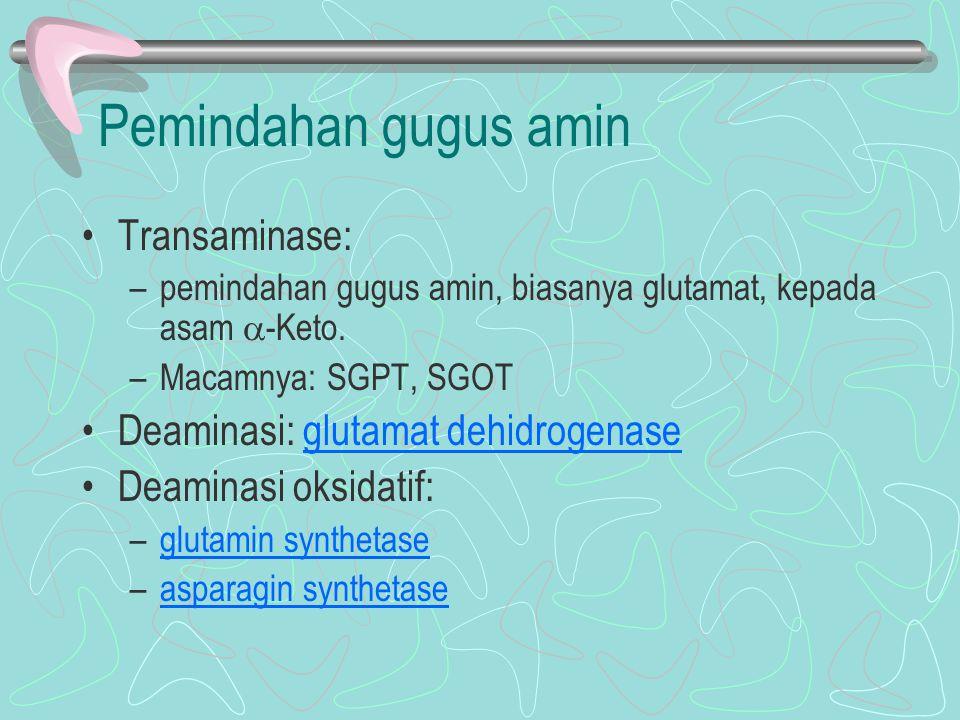 Pemindahan gugus amin Transaminase: –pemindahan gugus amin, biasanya glutamat, kepada asam  -Keto. –Macamnya: SGPT, SGOT Deaminasi: glutamat dehidrog