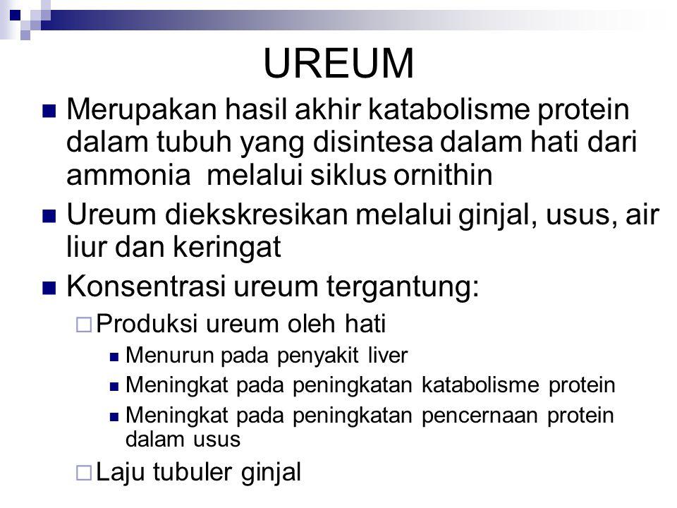 UREUM Merupakan hasil akhir katabolisme protein dalam tubuh yang disintesa dalam hati dari ammonia melalui siklus ornithin Ureum diekskresikan melalui