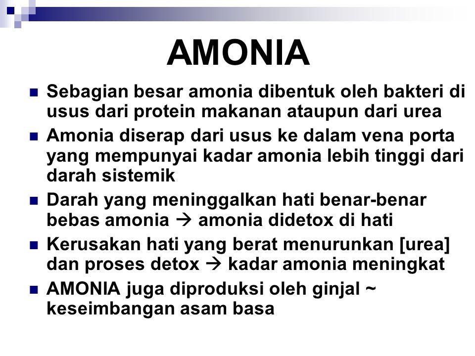 AMONIA Sebagian besar amonia dibentuk oleh bakteri di usus dari protein makanan ataupun dari urea Amonia diserap dari usus ke dalam vena porta yang me