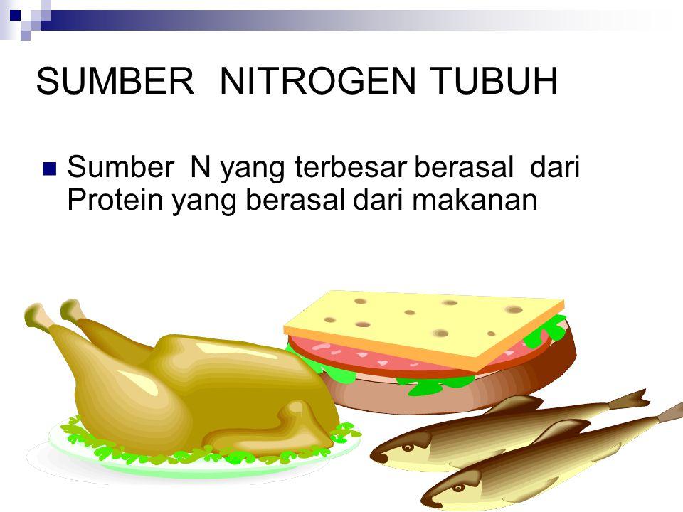 KESEIMBANGAN NITROGEN Anabolisme >< Katabolisme
