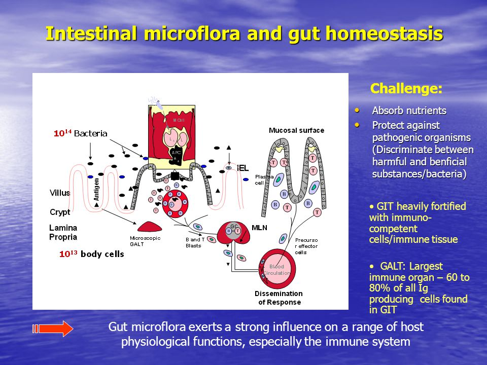 Intestinal microflora and gut homeostasis Gut microflora exerts a strong influence on a range of host physiological functions, especially the immune system Challenge: GIT heavily fortified with immuno- competent cells/immune tissue GALT: Largest immune organ – 60 to 80% of all Ig producing cells found in GIT Absorb nutrients Absorb nutrients Protect against pathogenic organisms (Discriminate between harmful and benficial substances/bacteria) Protect against pathogenic organisms (Discriminate between harmful and benficial substances/bacteria)