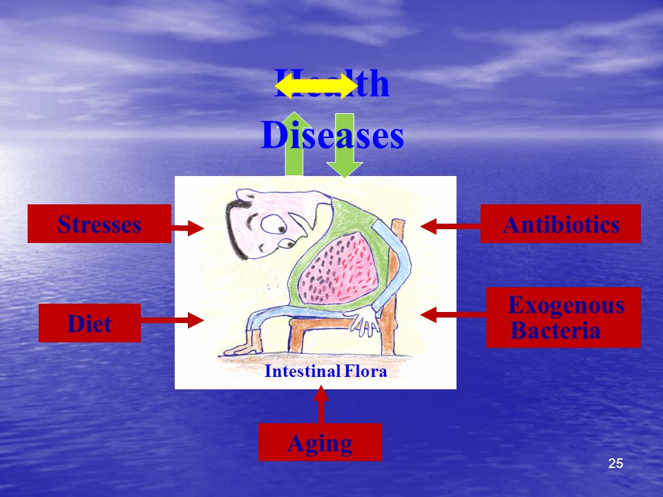 Aging Intestinal Flora Stresses Diet Antibiotics Health Diseases Exogenous Bacteria 25