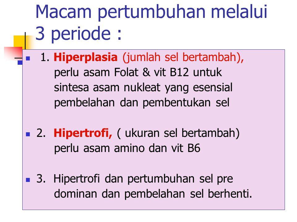 Periode kehamilan 3.