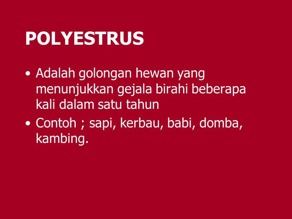 POLYESTRUS Adalah golongan hewan yang menunjukkan gejala birahi beberapa kali dalam satu tahun Contoh ; sapi, kerbau, babi, domba, kambing.