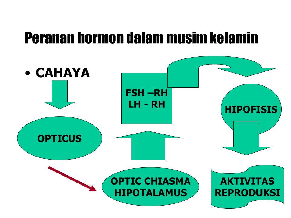 Peranan hormon dalam musim kelamin CAHAYA OPTICUS OPTIC CHIASMA HIPOTALAMUS FSH –RH LH - RH HIPOFISIS AKTIVITAS REPRODUKSI