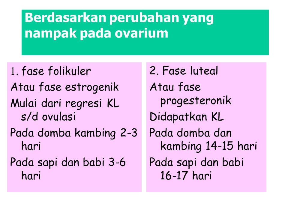 Berdasarkan perubahan yang nampak pada ovarium 2. Fase luteal Atau fase progesteronik Didapatkan KL Pada domba dan kambing 14-15 hari Pada sapi dan ba