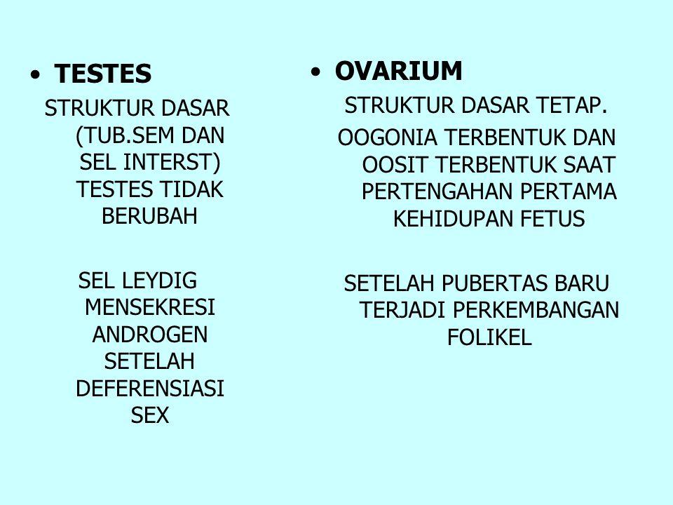 TESTES STRUKTUR DASAR (TUB.SEM DAN SEL INTERST) TESTES TIDAK BERUBAH SEL LEYDIG MENSEKRESI ANDROGEN SETELAH DEFERENSIASI SEX OVARIUM STRUKTUR DASAR TE