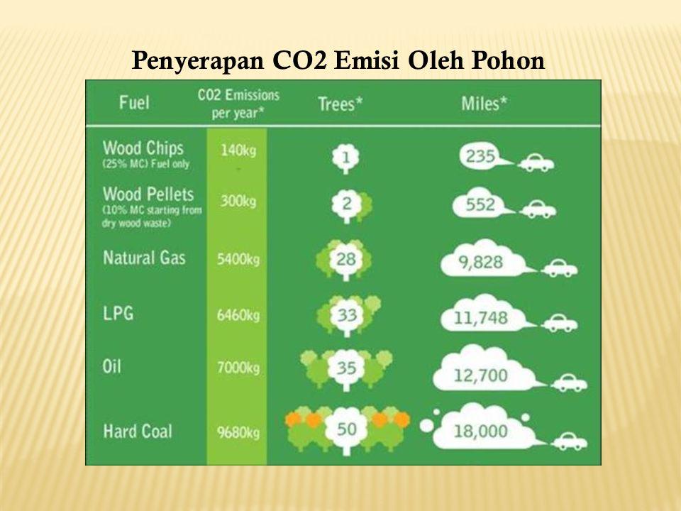 Penyerapan CO2 Emisi Oleh Pohon