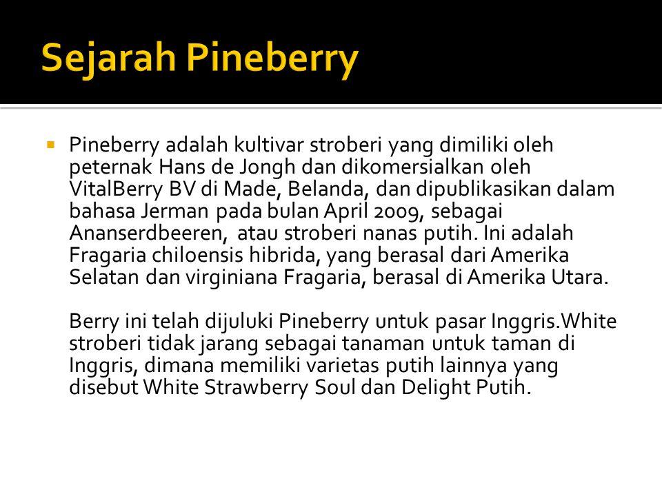  Pineberry adalah kultivar stroberi yang dimiliki oleh peternak Hans de Jongh dan dikomersialkan oleh VitalBerry BV di Made, Belanda, dan dipublikasikan dalam bahasa Jerman pada bulan April 2009, sebagai Ananserdbeeren, atau stroberi nanas putih.