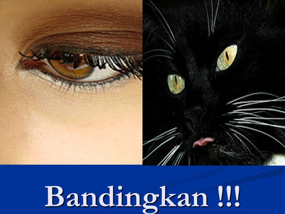 Bandingkan !!!