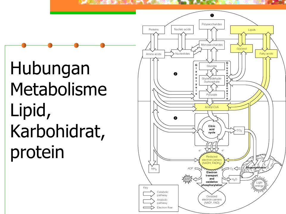 Hubungan Metabolisme Lipid, Karbohidrat, protein