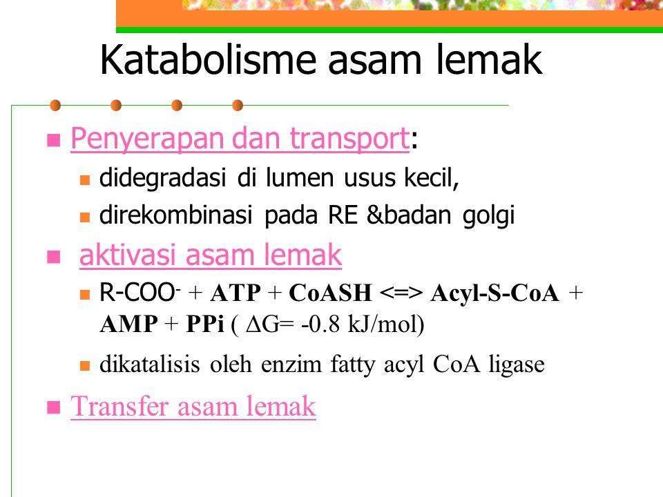 Katabolisme asam lemak Penyerapan dan transport: Penyerapan dan transport didegradasi di lumen usus kecil, direkombinasi pada RE &badan golgi aktivasi