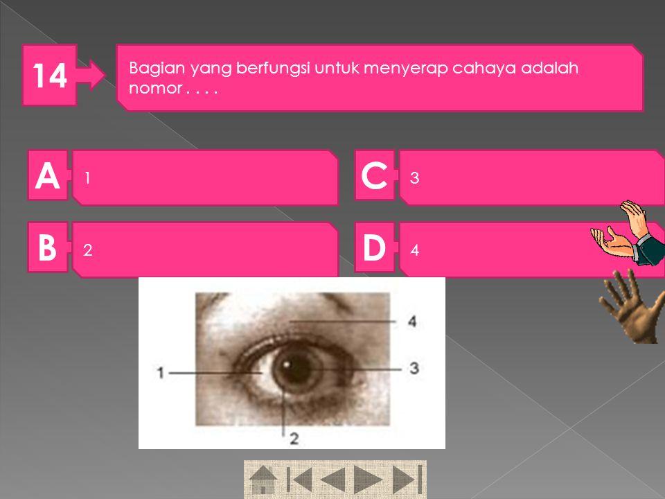 13 Perhatikan gambar di bawah! Tulang rusuk ditunjukkan oleh nomor …. A 1 B 2 C 3 D 4