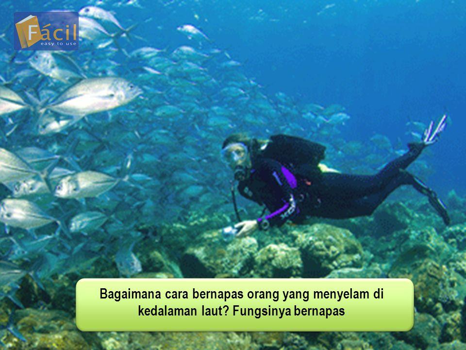 Bagaimana cara bernapas orang yang menyelam di kedalaman laut? Fungsinya bernapas
