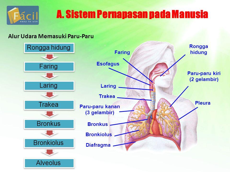 C.Gangguan pada Sistem Pernapasna Manusia 1.