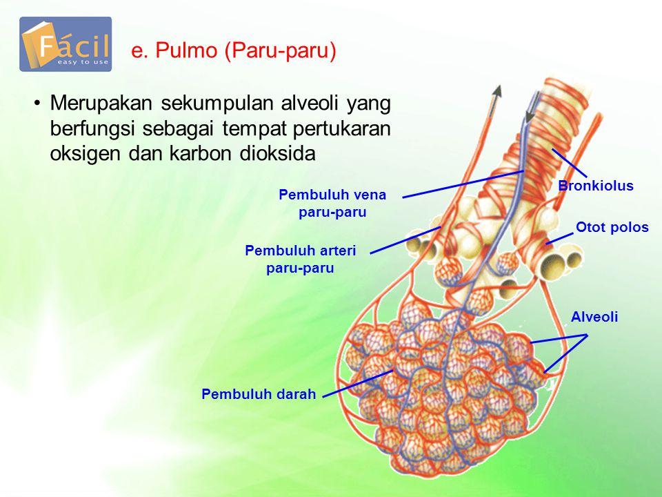 2.Pertukaran Udara Udara yang masuk ke dalam paru-paru, berbeda dengan udara yang dikeluarkan Tabel.
