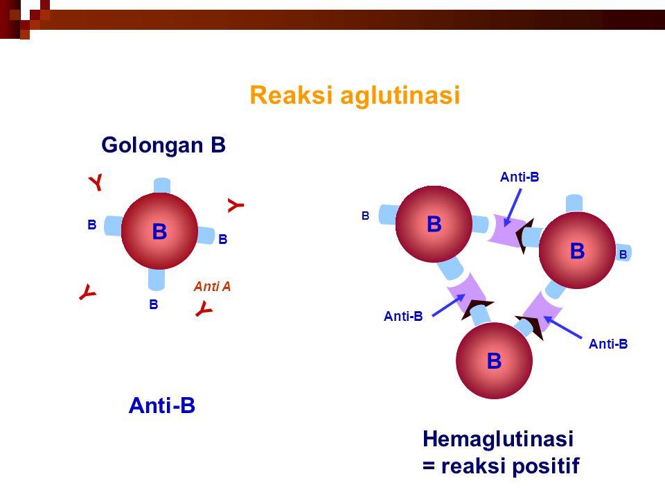 41 Reaksi aglutinasi B B B B Anti A B Hemaglutinasi = reaksi positif B B Anti-B + B B Golongan B Y Y Y Y