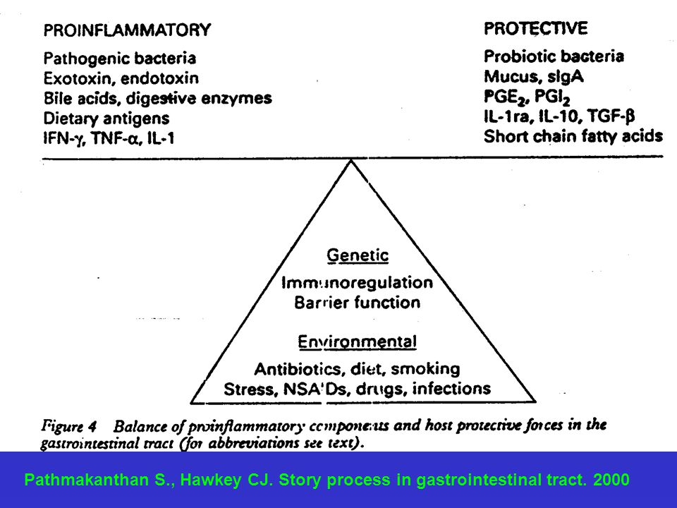 Pathmakanthan S., Hawkey CJ. Story process in gastrointestinal tract. 2000