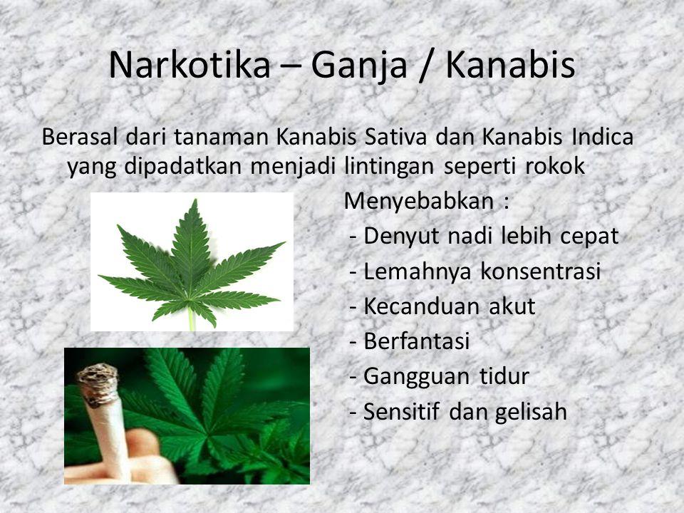 Narkotika – Ganja / Kanabis Berasal dari tanaman Kanabis Sativa dan Kanabis Indica yang dipadatkan menjadi lintingan seperti rokok Menyebabkan : - Denyut nadi lebih cepat - Lemahnya konsentrasi - Kecanduan akut - Berfantasi - Gangguan tidur - Sensitif dan gelisah