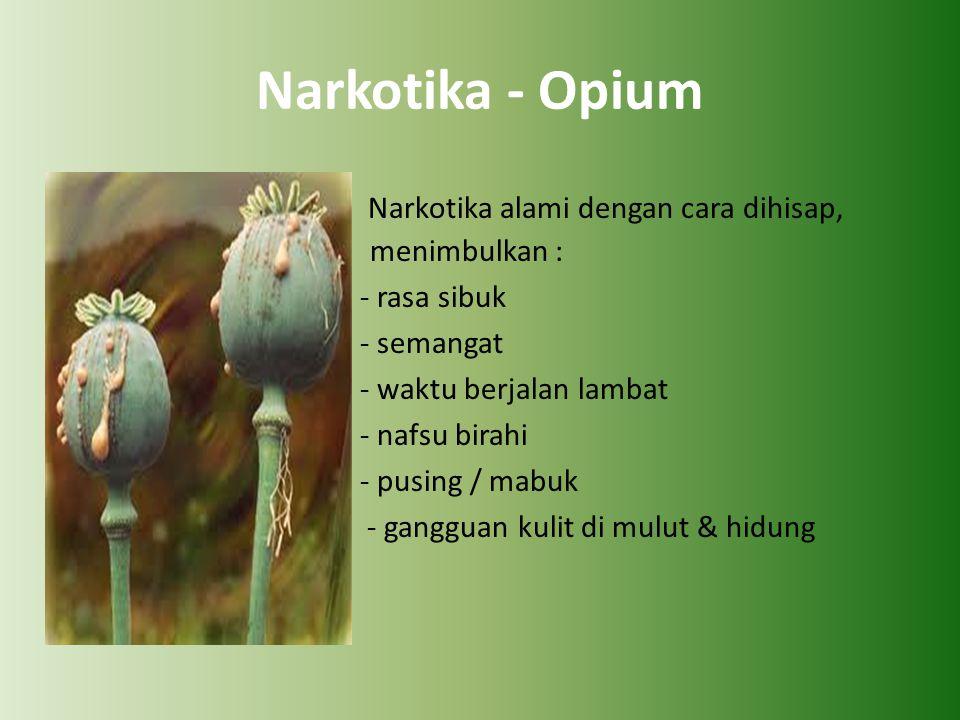 Narkotika - Opium Narkotika alami dengan cara dihisap, menimbulkan : - rasa sibuk - semangat - waktu berjalan lambat - nafsu birahi - pusing / mabuk - gangguan kulit di mulut & hidung