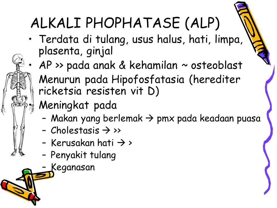 ALKALI PHOPHATASE (ALP) Terdata di tulang, usus halus, hati, limpa, plasenta, ginjal AP >> pada anak & kehamilan ~ osteoblast Menurun pada Hipofosfata